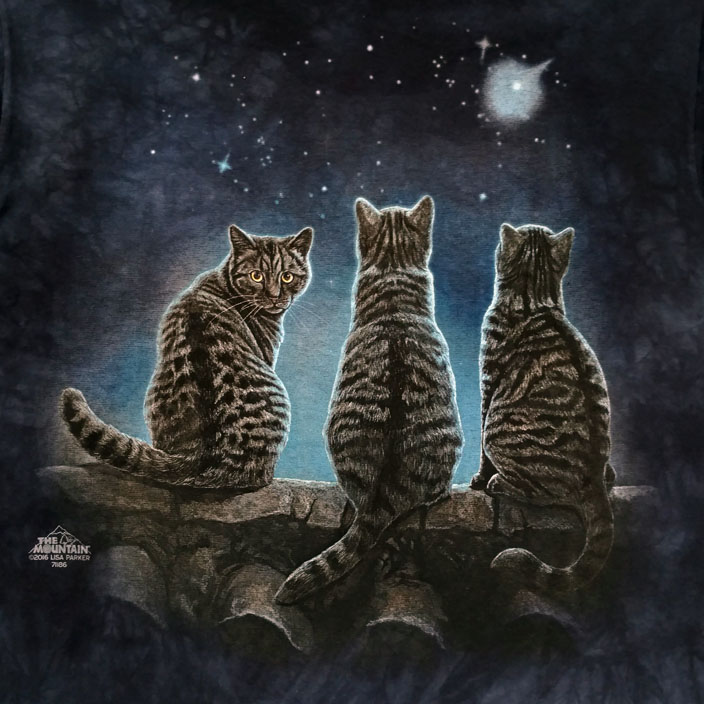 Stargazing Cats